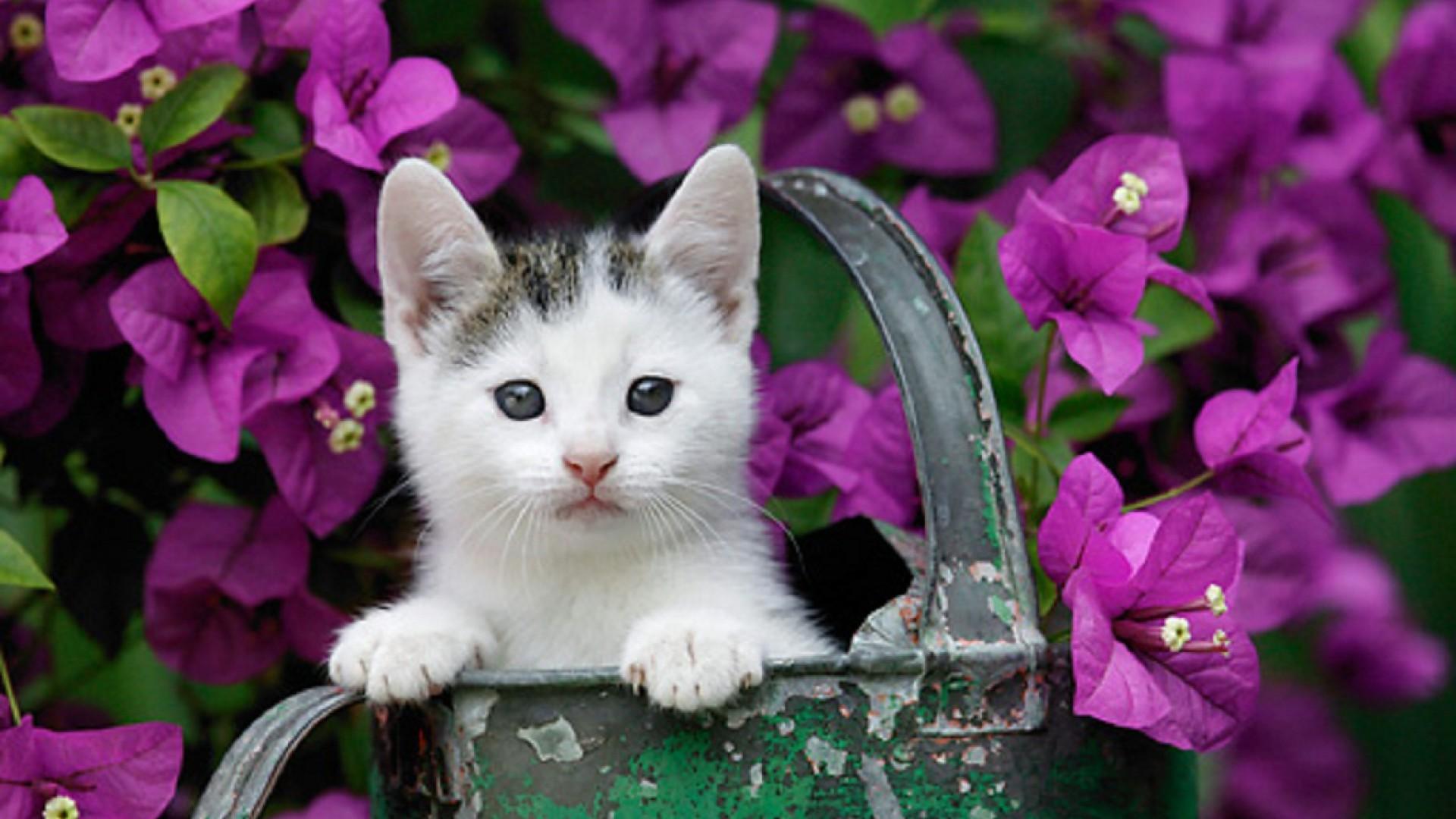 Gattini sfondi 73 immagini for Sfondi animali hd