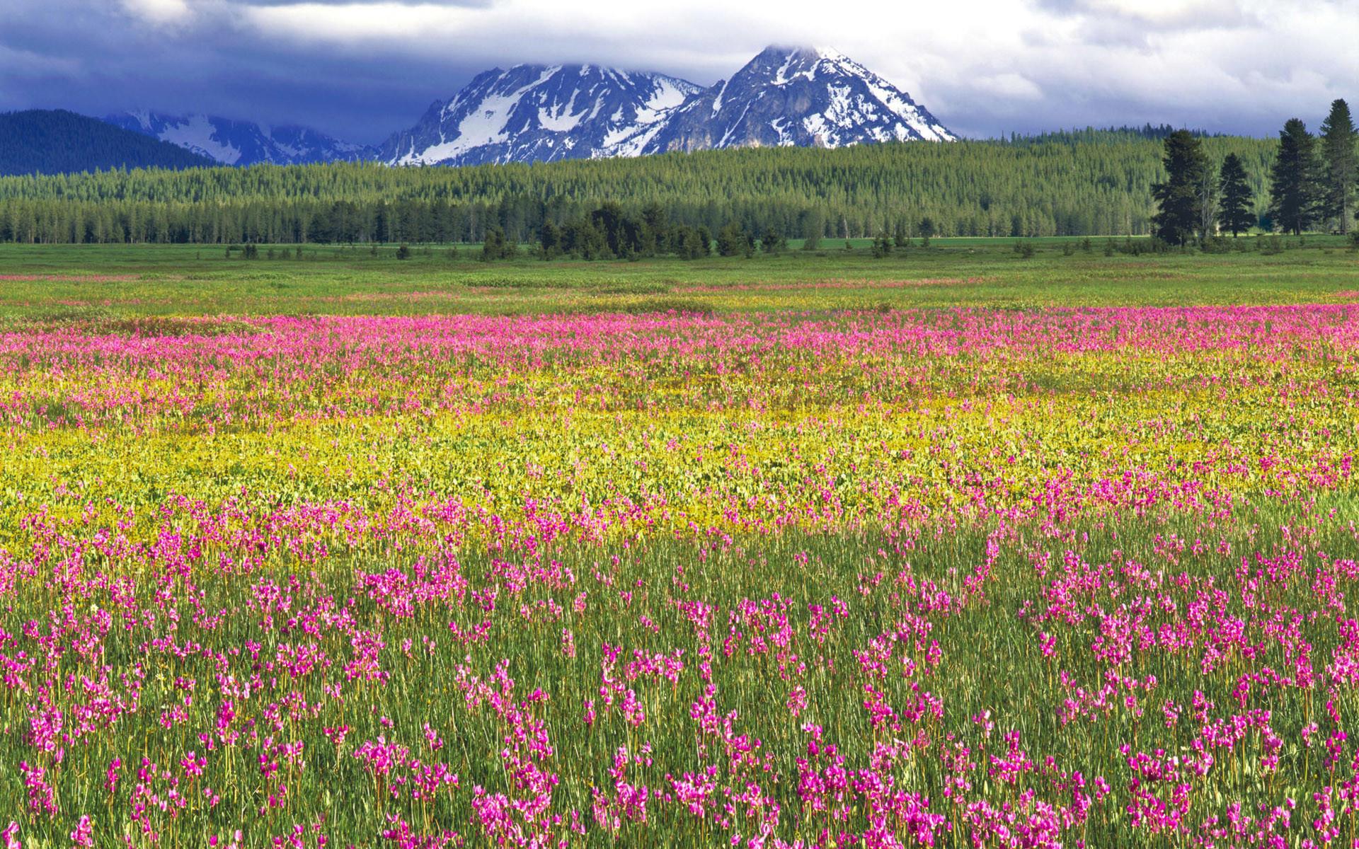 Sfondi desktop primavera 50 immagini for Wallpaper hd paesaggi