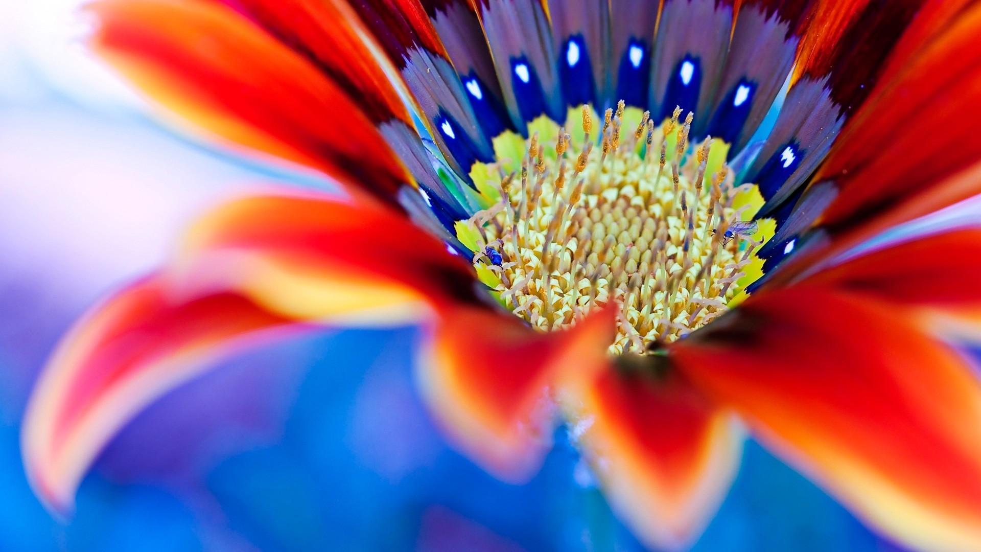 Sfondi full hd desktop fiori 86 immagini for Foto full hd per desktop