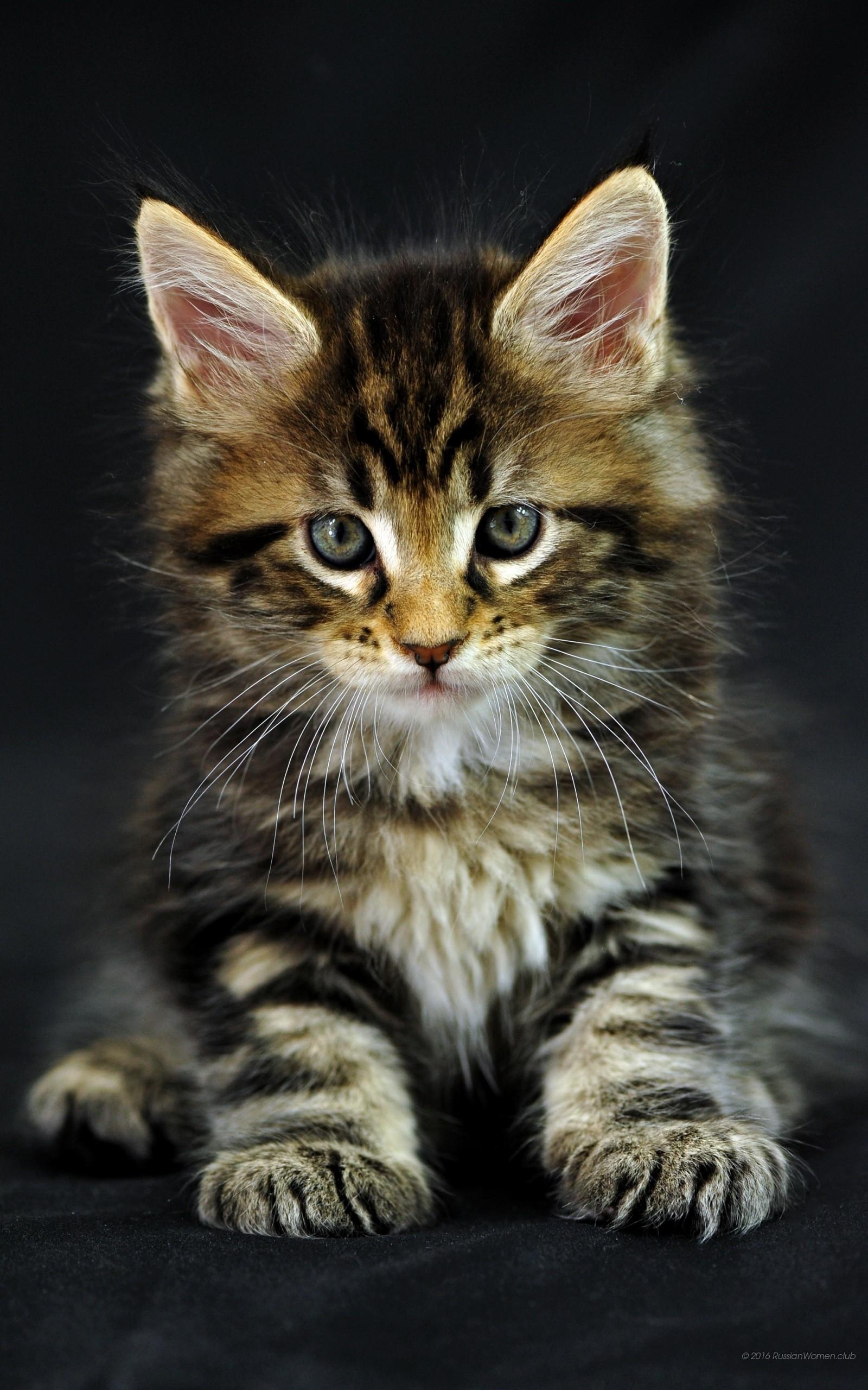 Sfondi gatti 61 immagini for 1600x2560 wallpaper hd