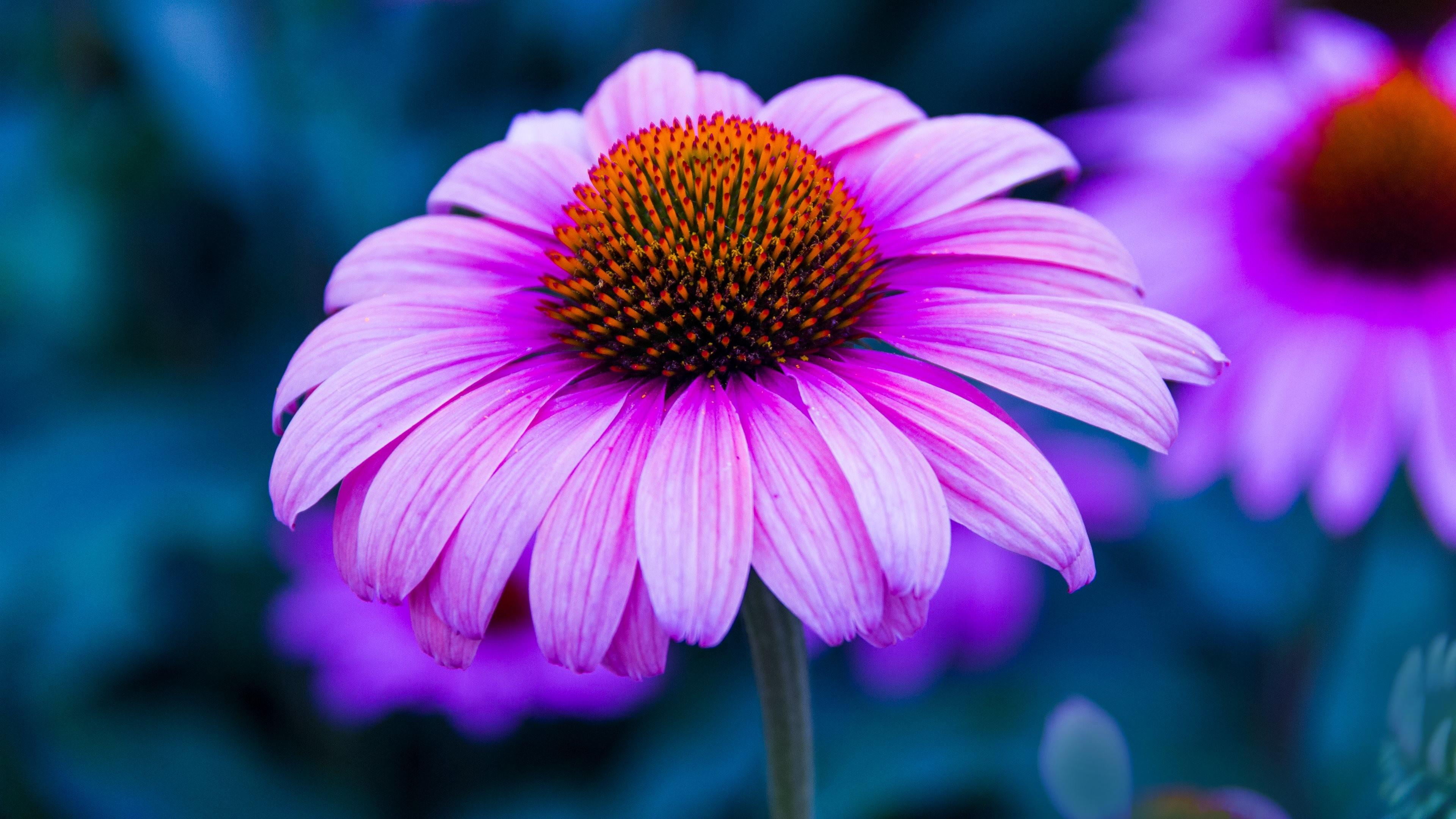 Sfondi con fiori 45 immagini for Sfondi desktop 4k