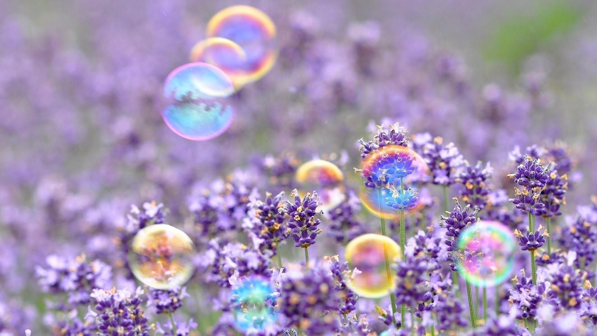 Sfondi full hd desktop fiori 86 immagini for Immagini gratis per desktop primavera
