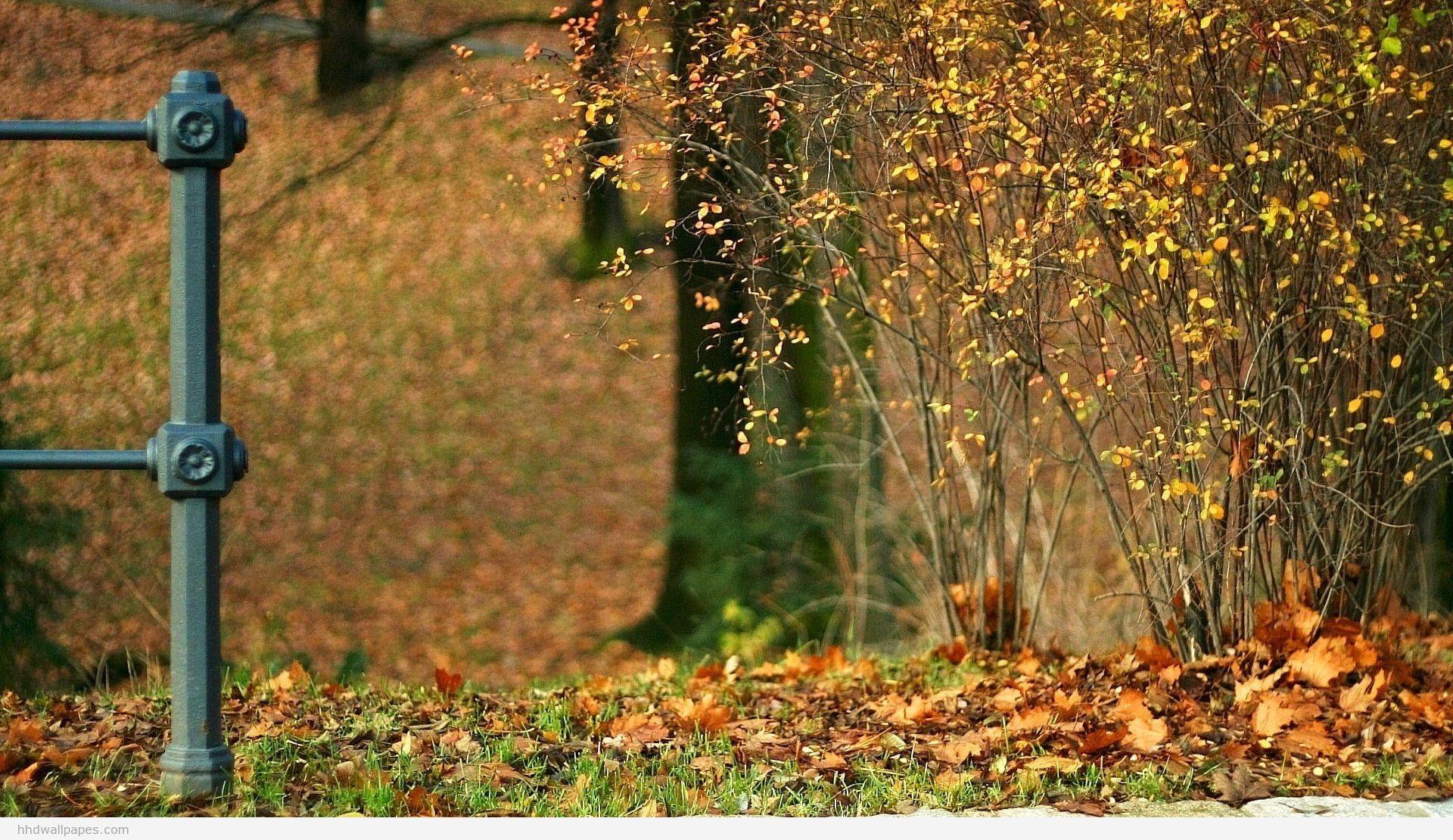 Sfondi per desktop 64 immagini for Immagini autunno hd