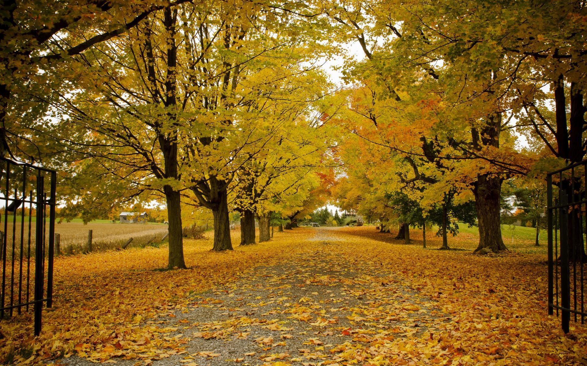 Sfondi autunnali 59 immagini for Immagini autunno hd