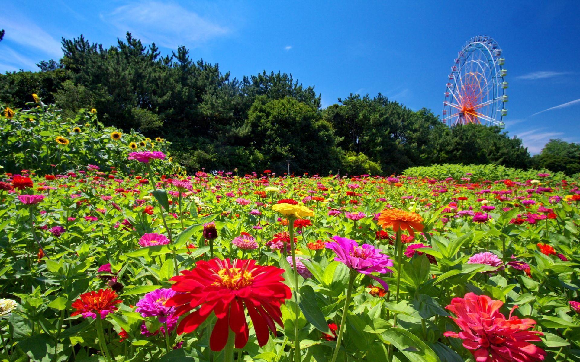 Sfondi full hd desktop fiori 86 immagini for Sfondi desktop fiori