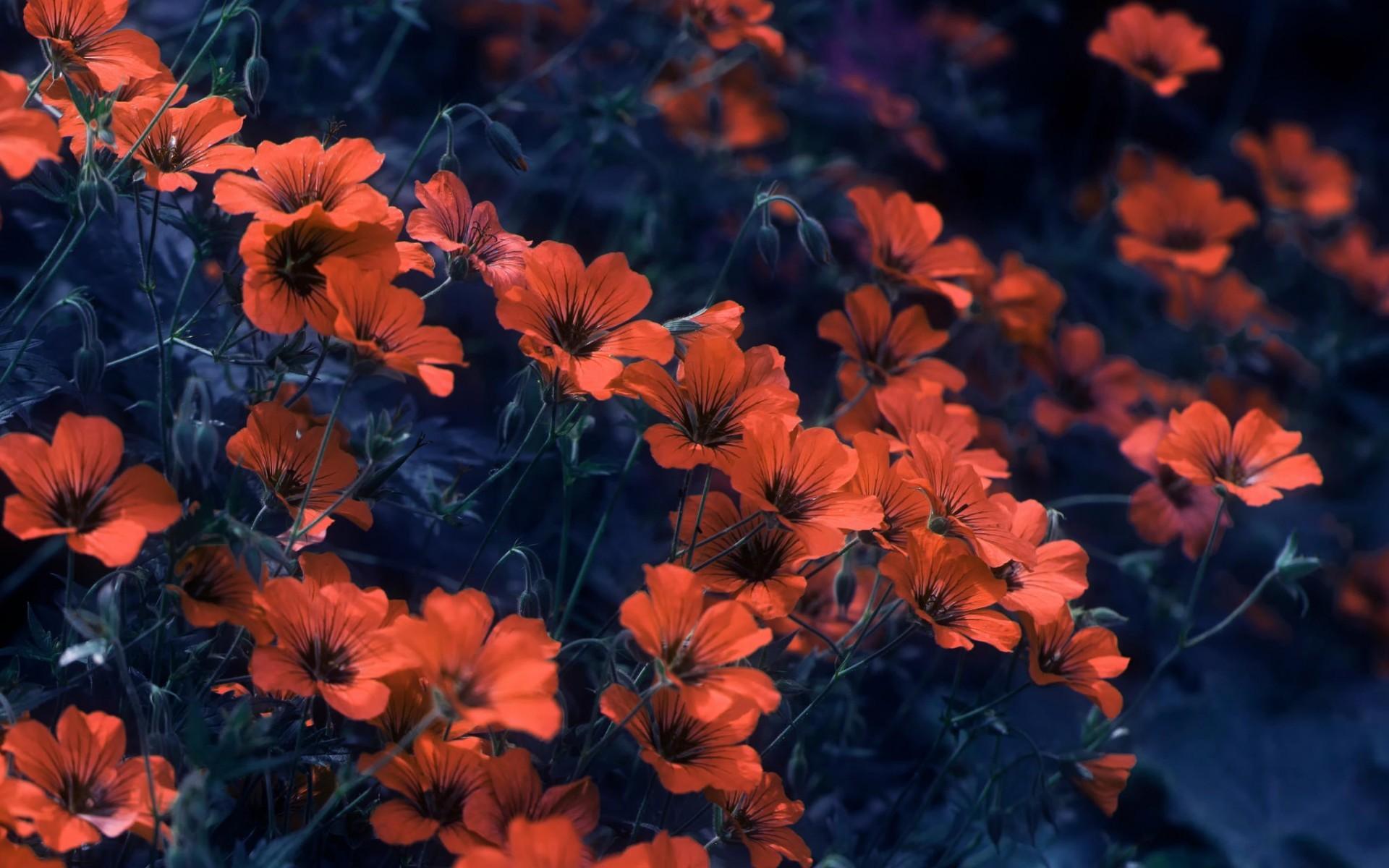 Sfondi fiori tumblr 68 immagini for Immagini per desktop fiori