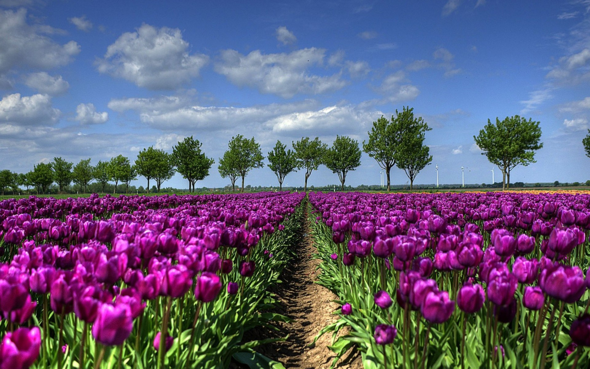 Sfondi primavera hd 71 immagini for Sfondi desktop hd paesaggi