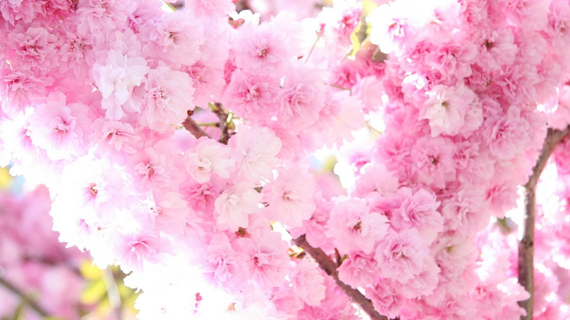 Primavera sfondi 46 immagini for Sfondi 1920x1080