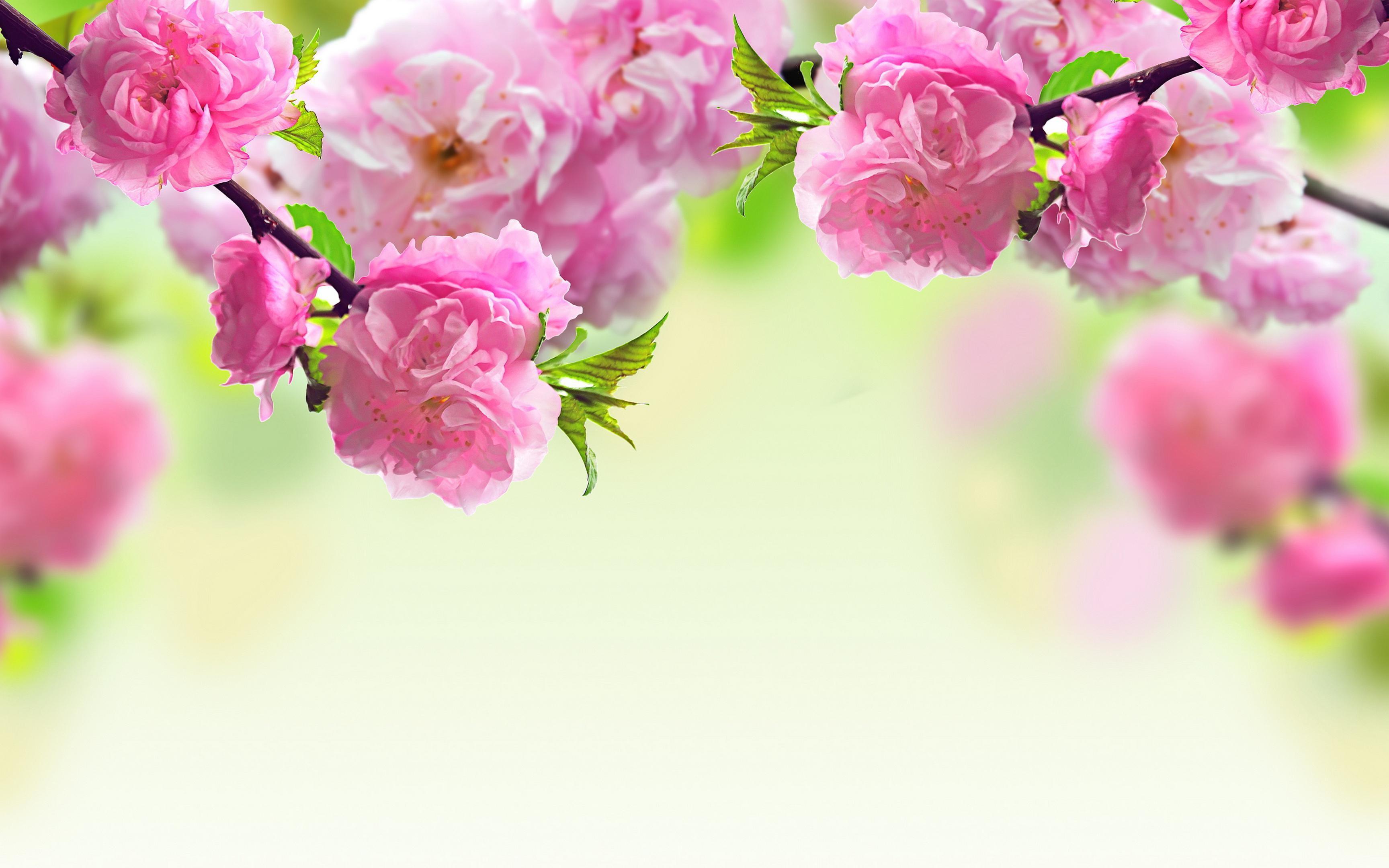 Primavera sfondi 46 immagini for Fiori di primavera