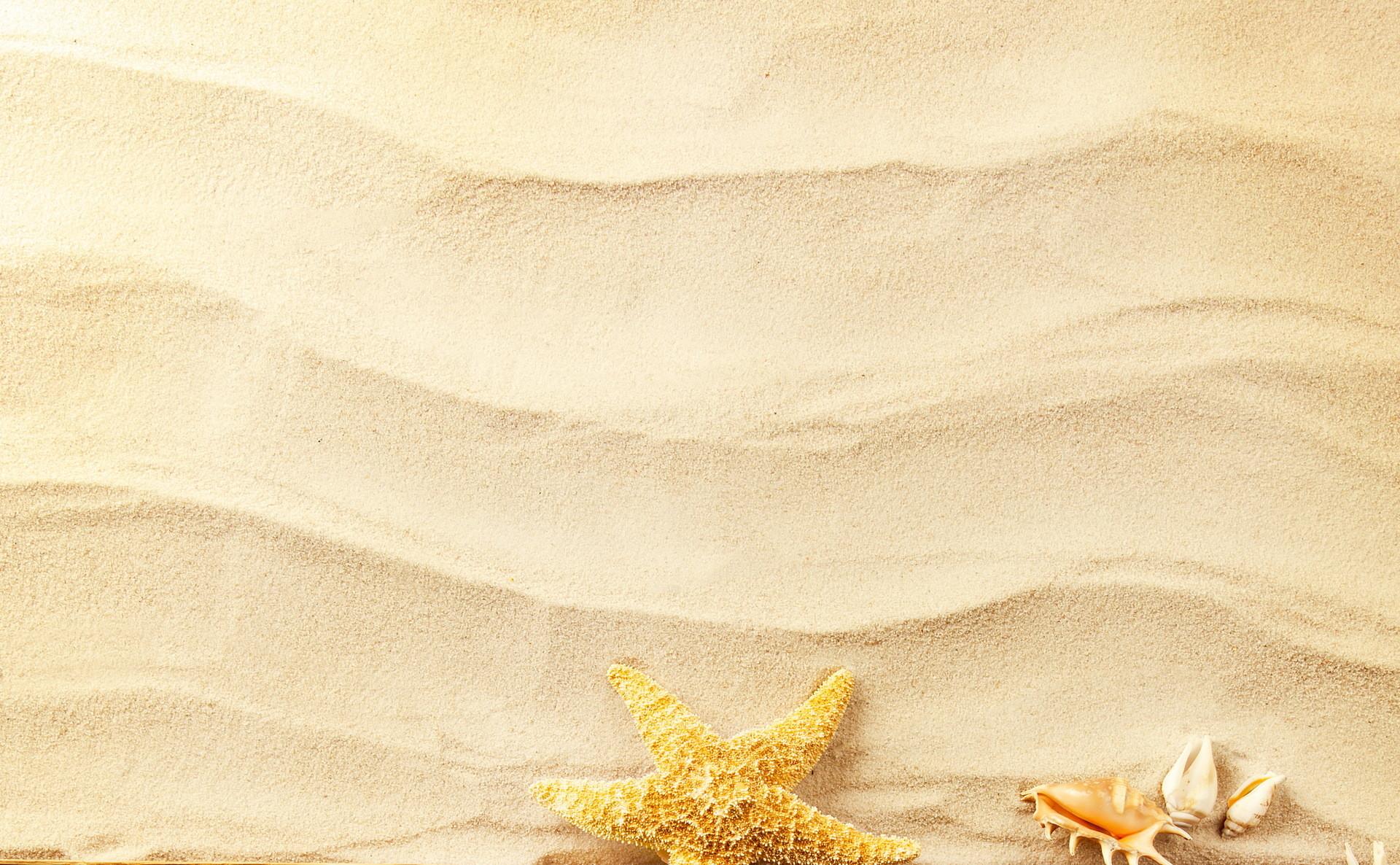 Conchiglie marine sfondi 43 immagini - Immagini di spongebob e sabbia ...