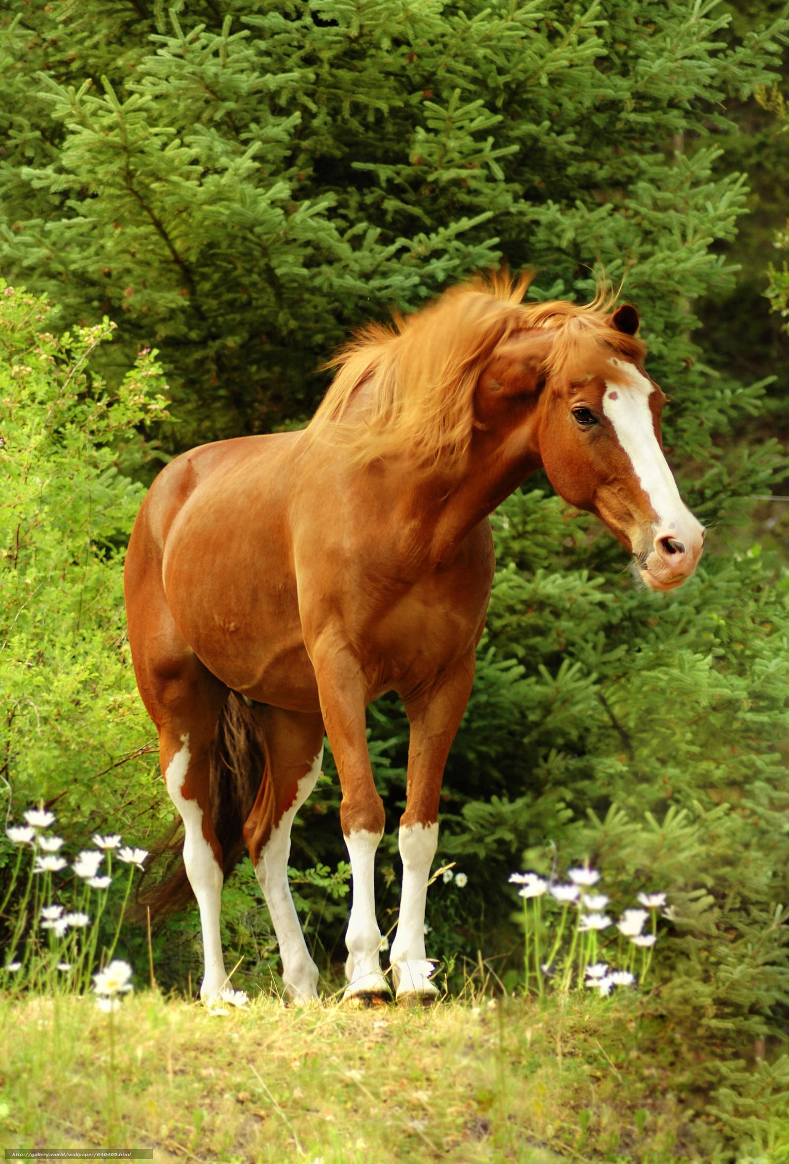 Sfondi cavalli 54 immagini for Sfondi cavalli gratis