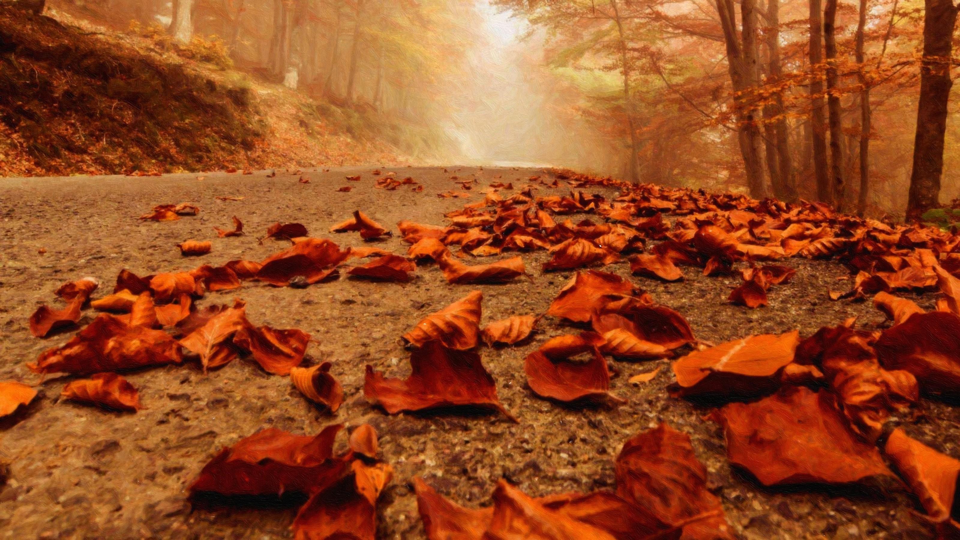 Sfondi autunno 48 immagini for Sfondi autunno hd