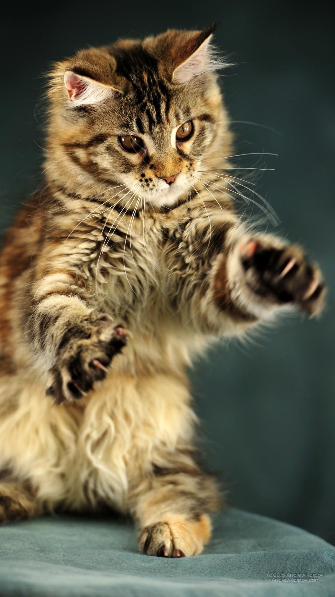 gattini sfondi 73 immagini