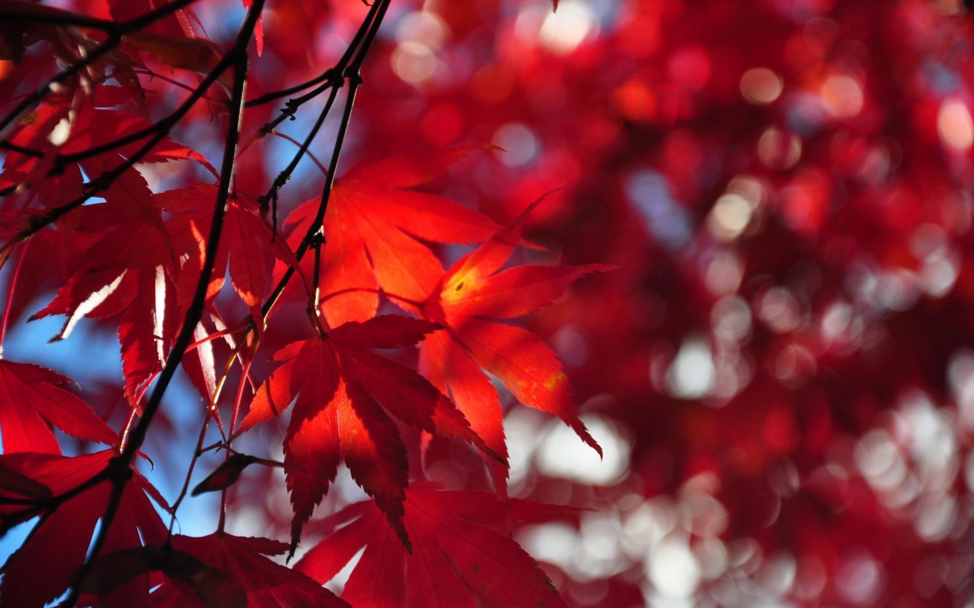 Sfondi desktop autunno 49 immagini for Immagini invernali per sfondo desktop
