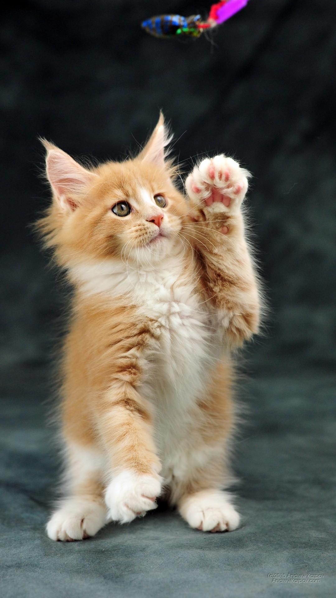 Gattini sfondi 73 immagini for Sfondi desktop animali