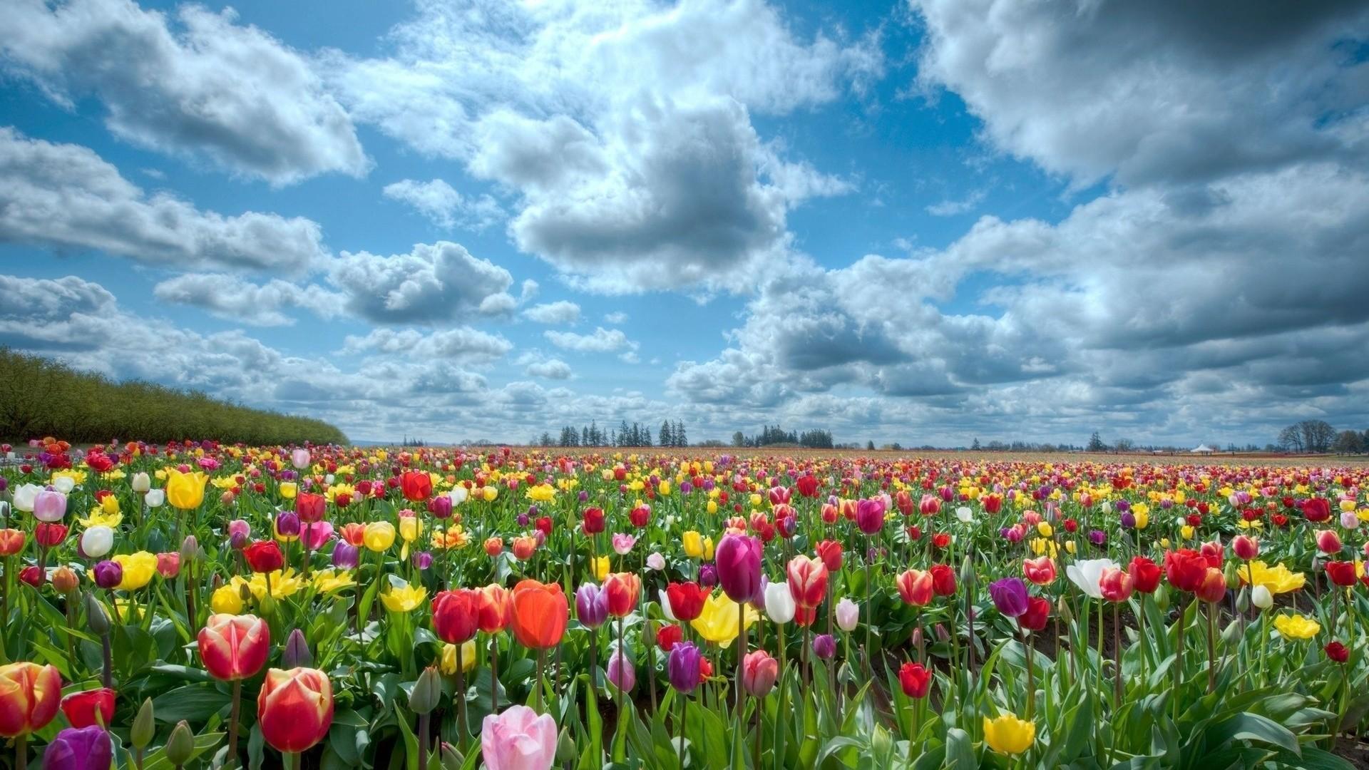 Sfondi desktop primavera 50 immagini for Immagini sfondo hd