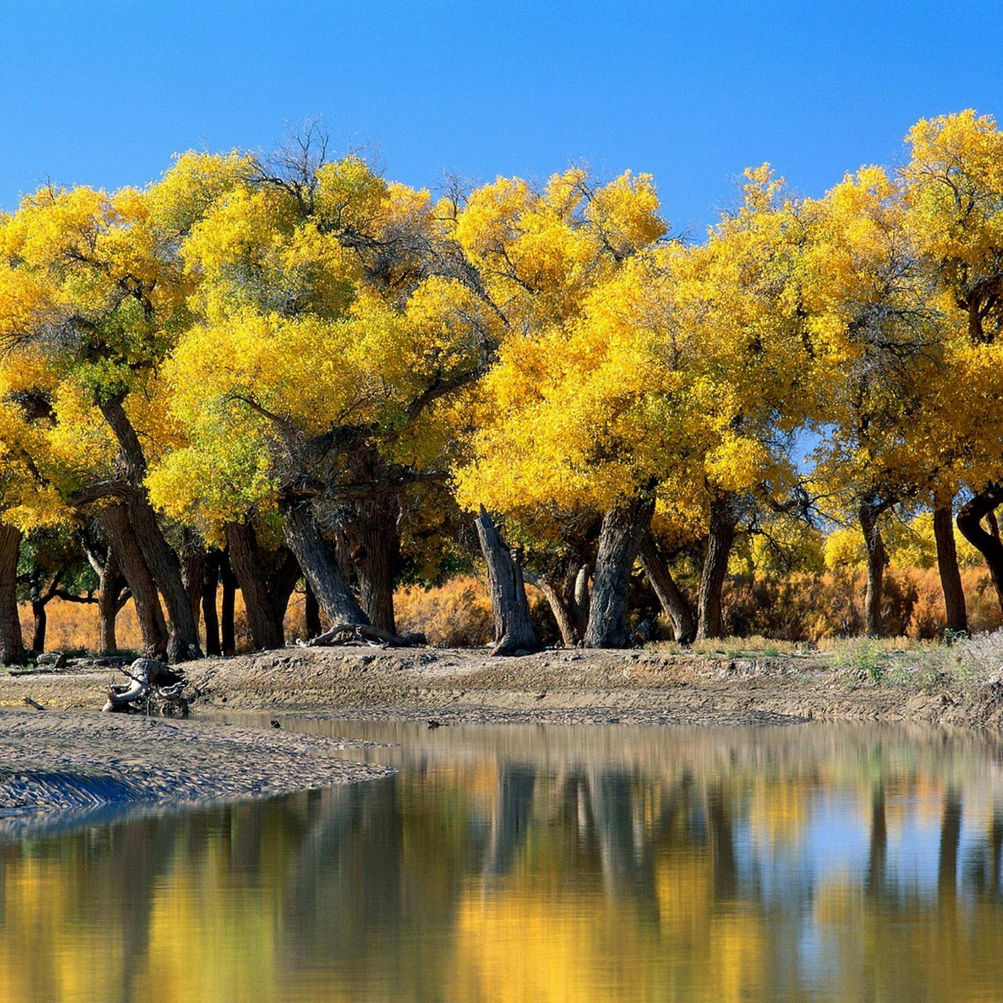 Autunno sfondi 48 immagini for Sfondi autunno hd