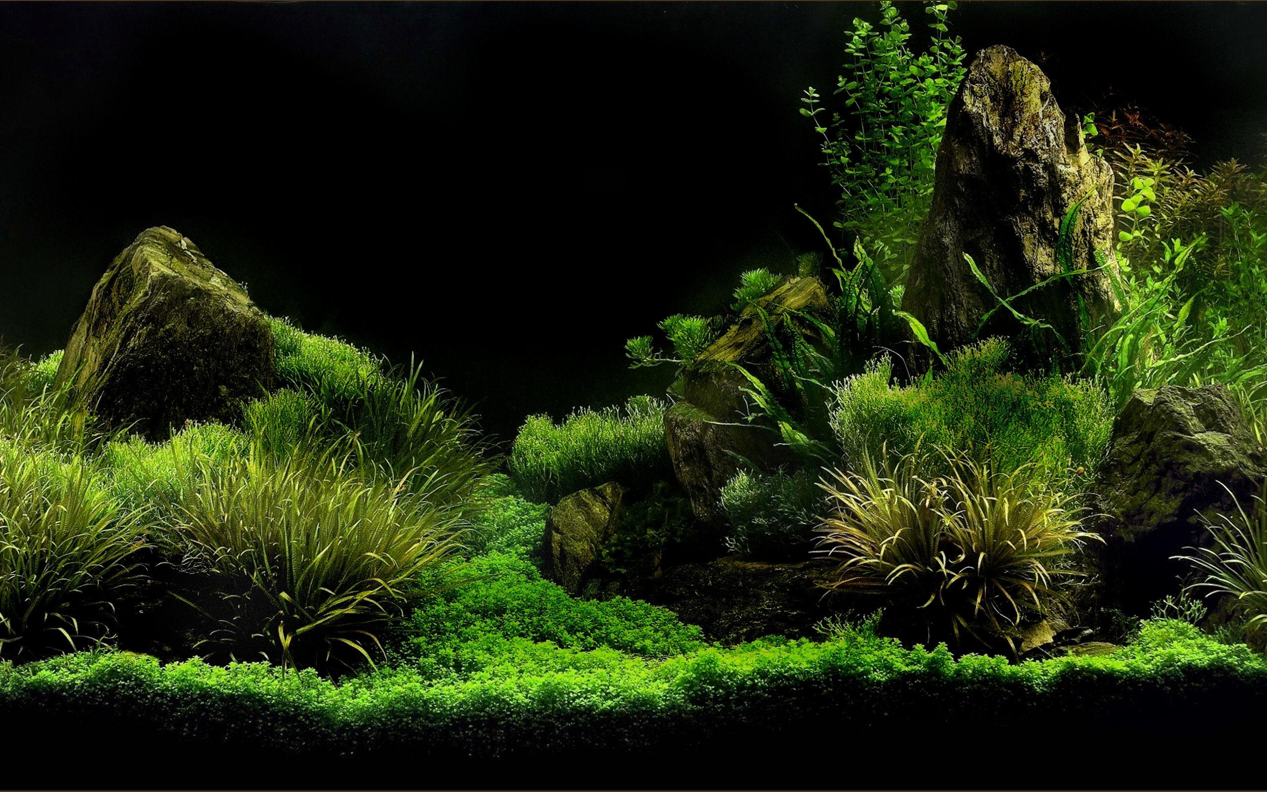 Sfondi acquario 61 immagini for Lepre immagini da stampare