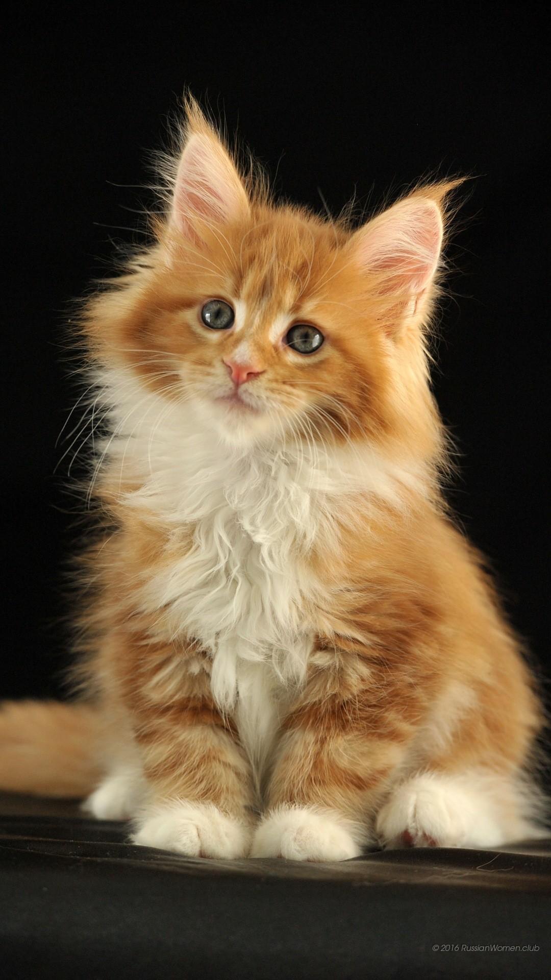 Gattini sfondi 73 immagini for Sfondi cellulare full hd