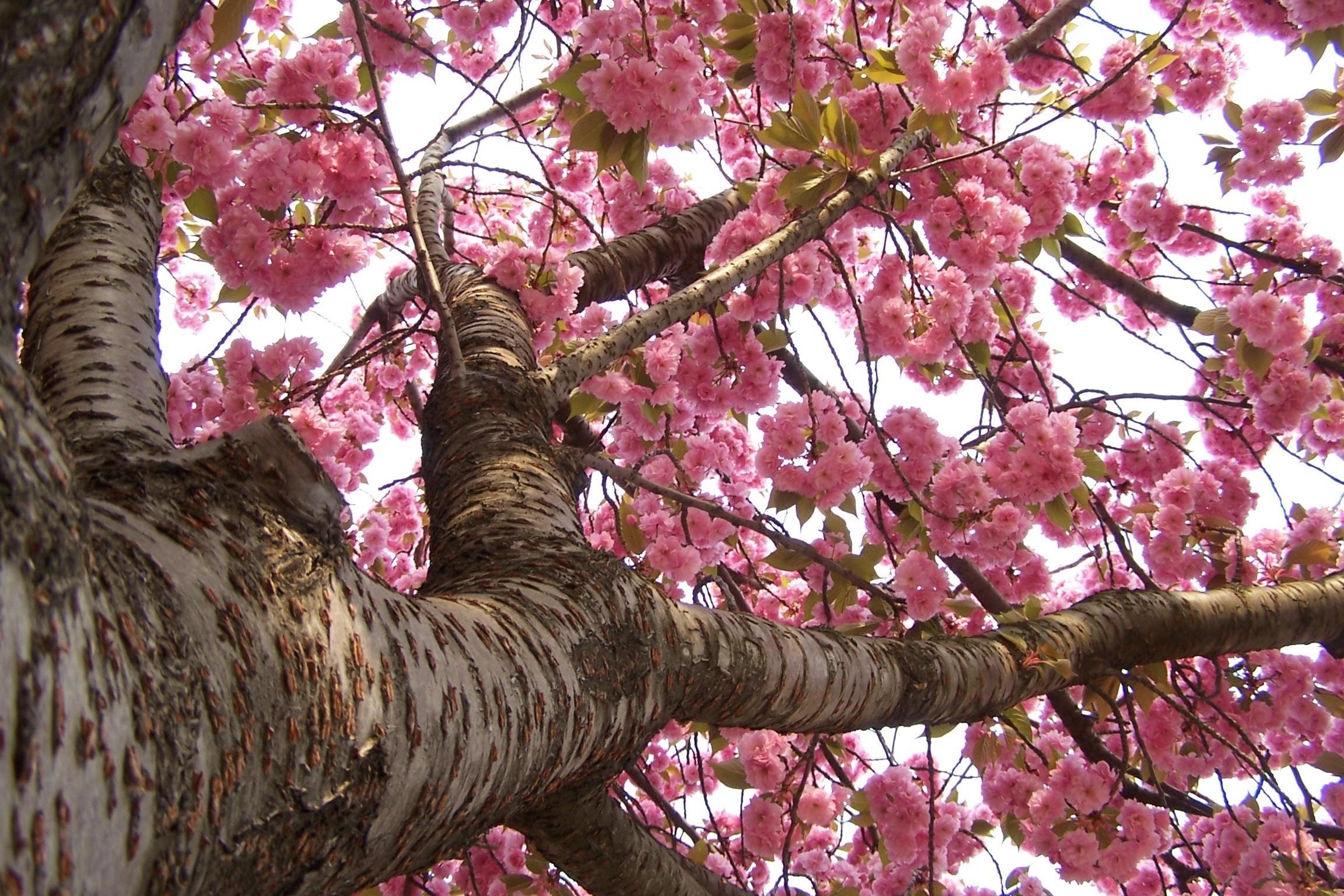 Sfondi full hd desktop fiori 86 immagini for Immagini desktop primavera