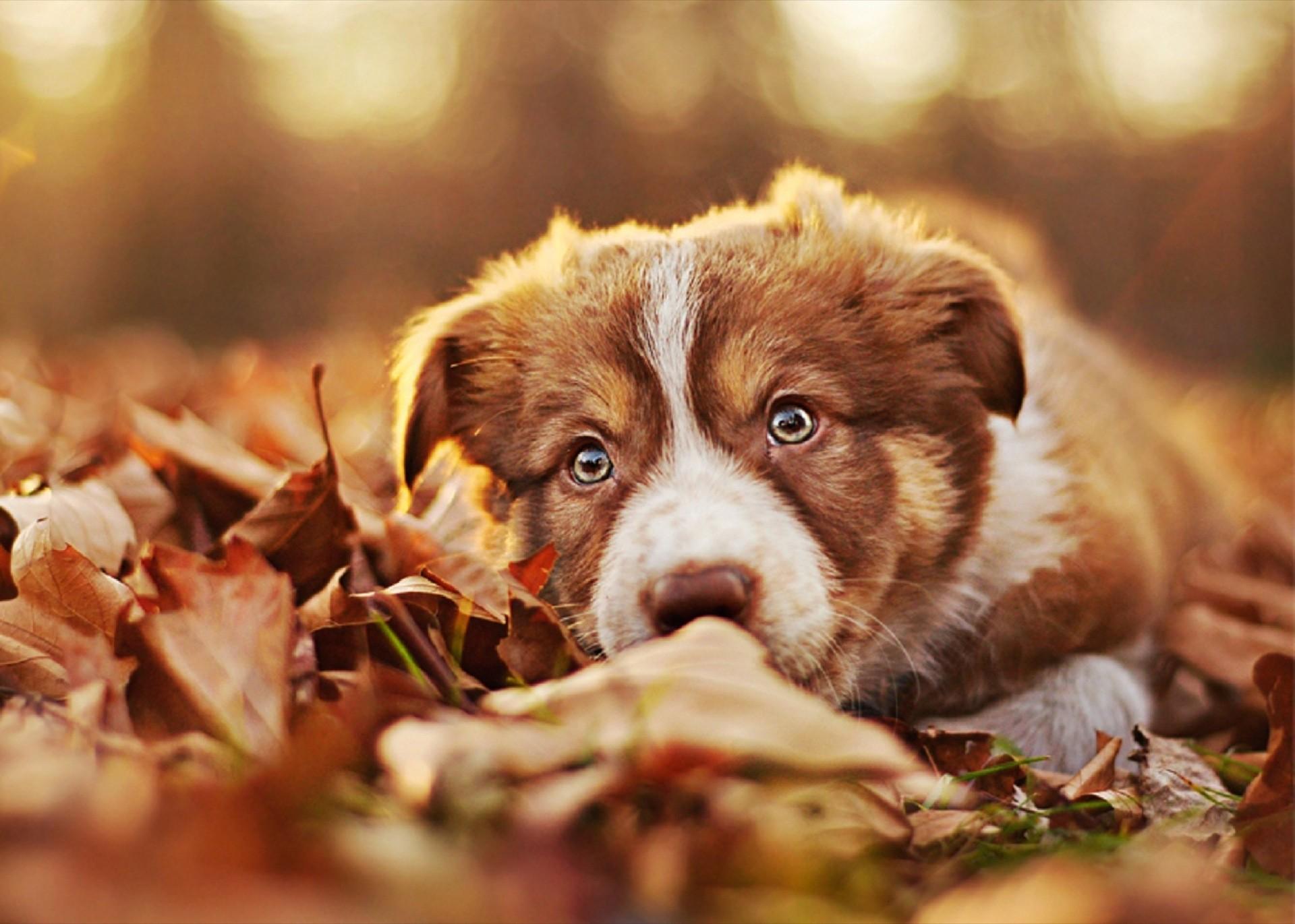 Sfondi cani 61 immagini for Immagini hd gratis