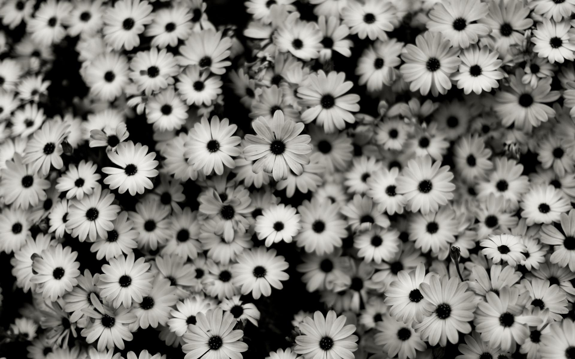 Immagini sfondo bianco tumblr