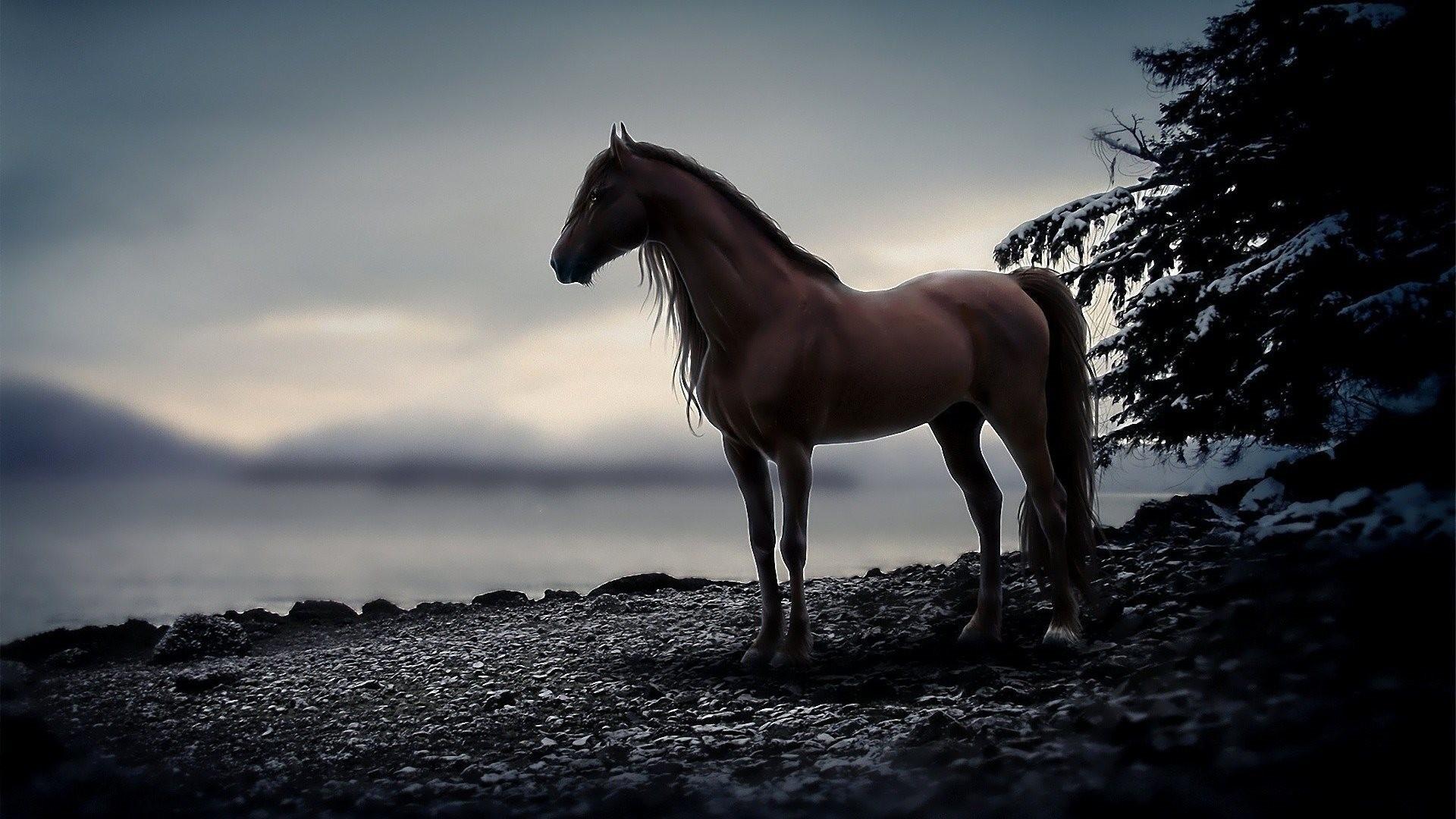 Sfondi cavalli 54 immagini for Disegni di casa alta
