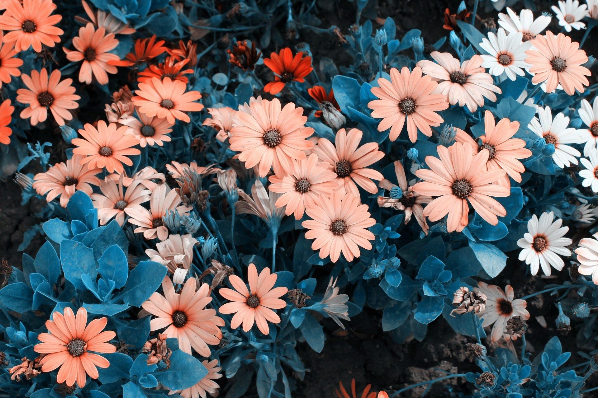 Fondos De Pantalla Hd Flores: Sfondi Tumblr Fiori (63+ Immagini
