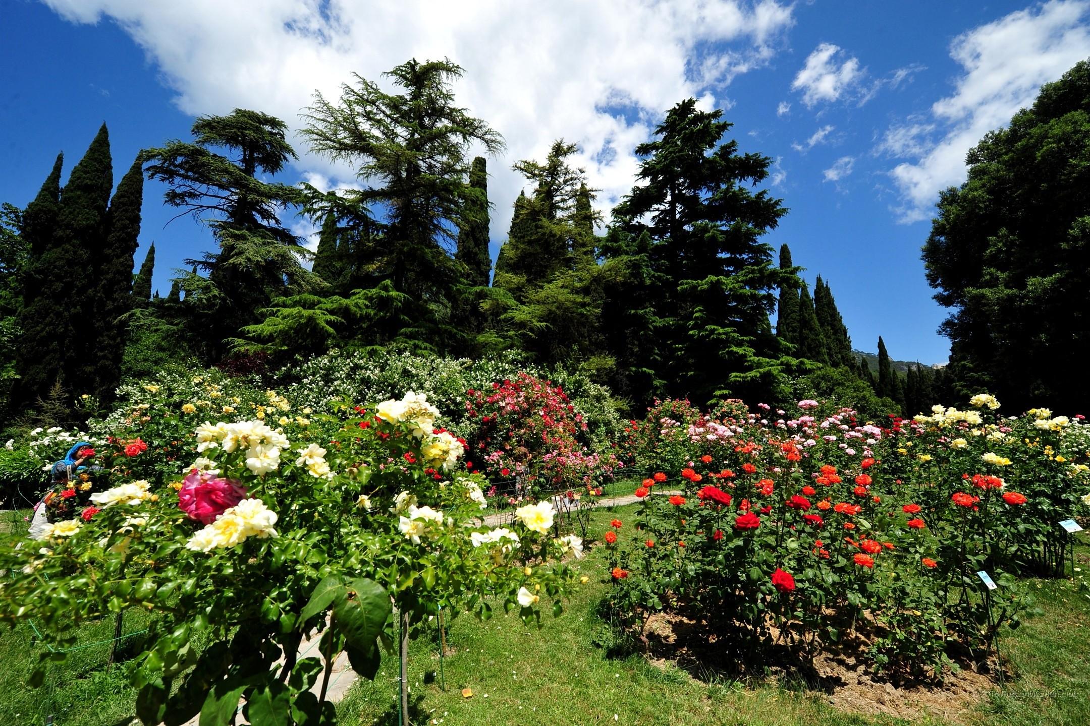 Sfondi estivi 83 immagini for Immagini per cellulari gratis