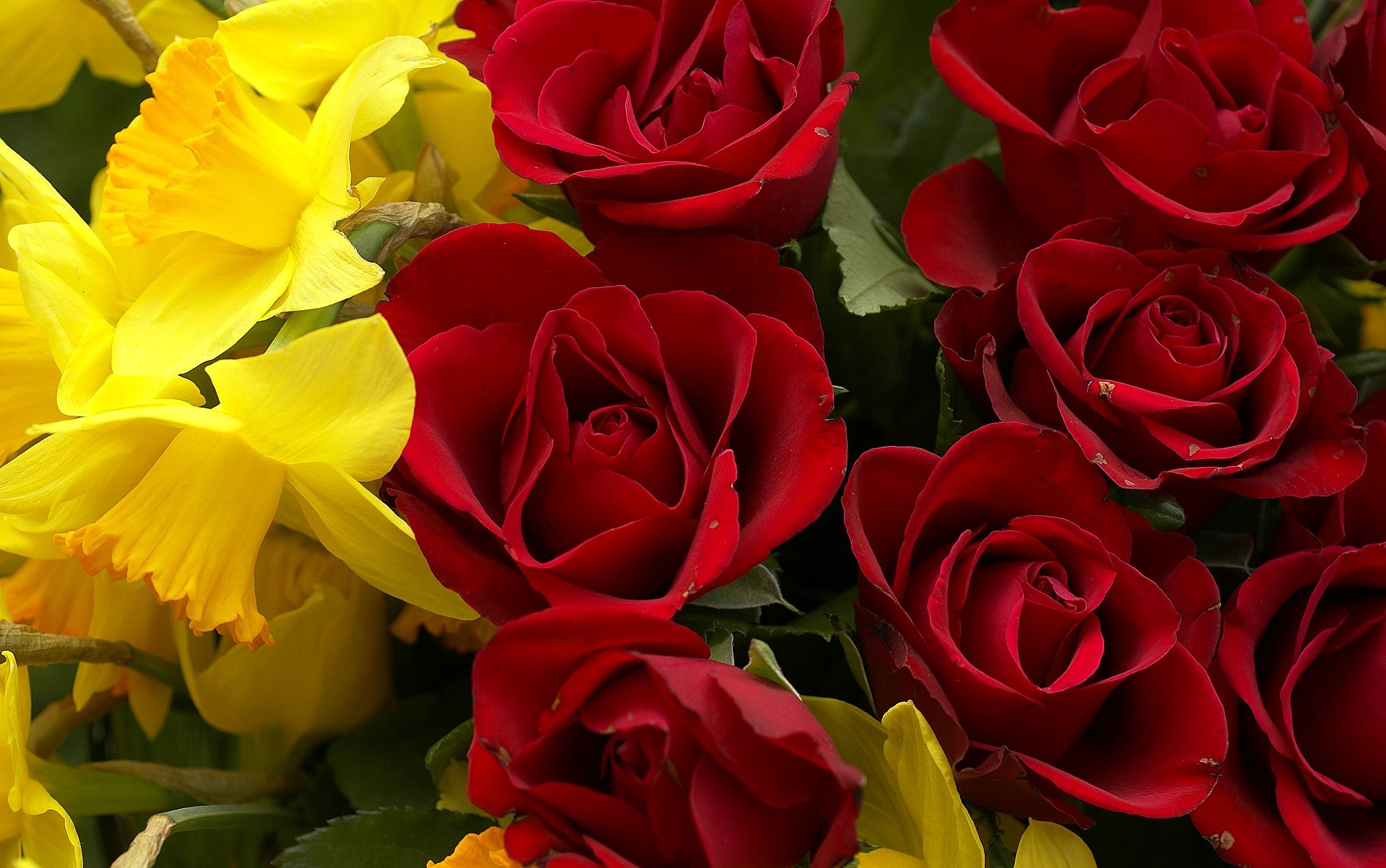 Sfondi Rose 65 Immagini
