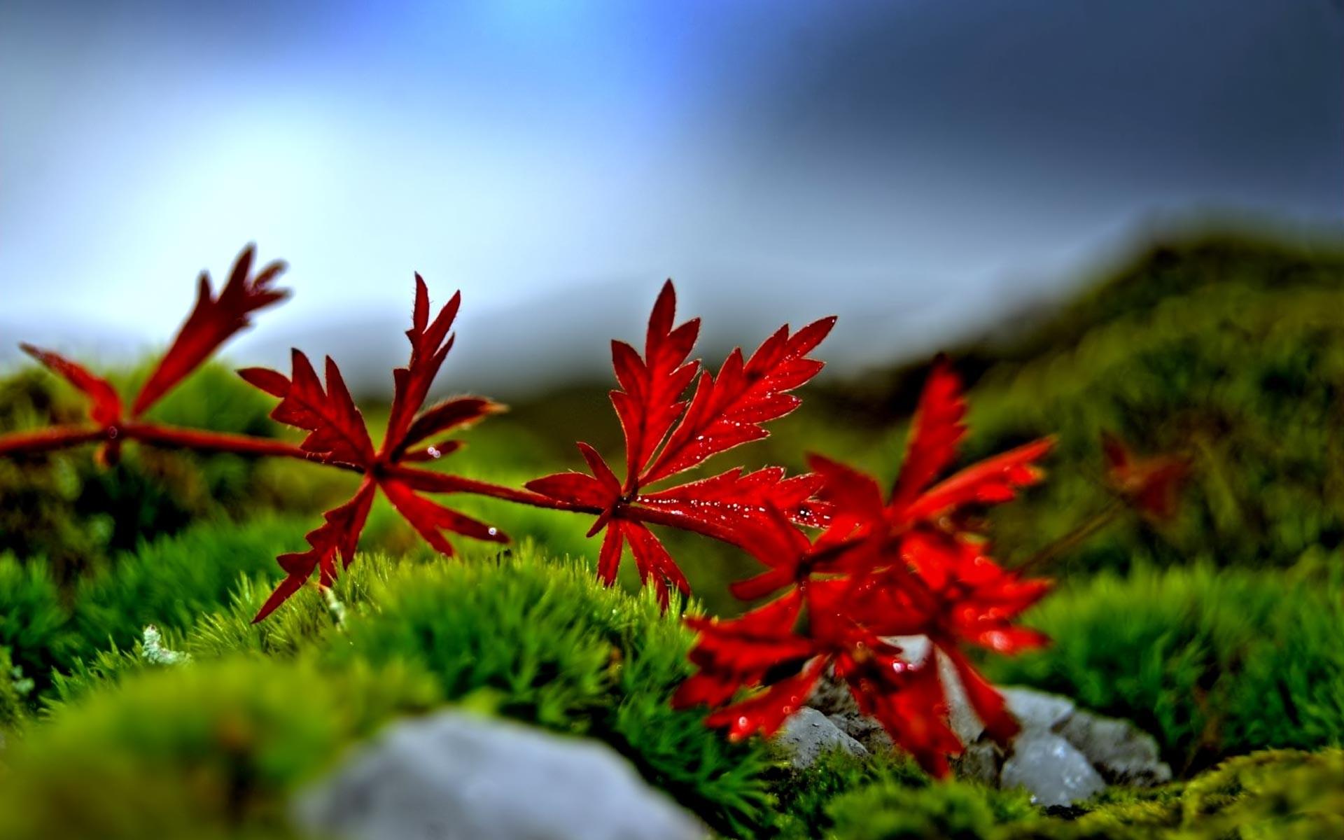 Sfondi desktop primavera 50 immagini for Foto per desktop gratis autunno