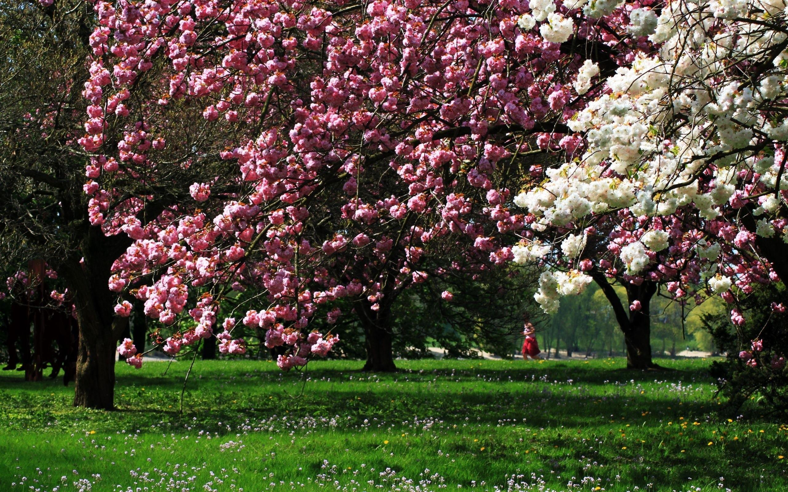 Sfondi alberi 42 immagini for Foto per desktop inverno
