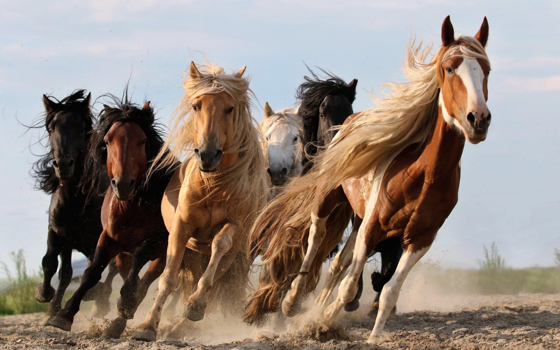 Sfondi cavalli 54 immagini for Sfondi desktop animali
