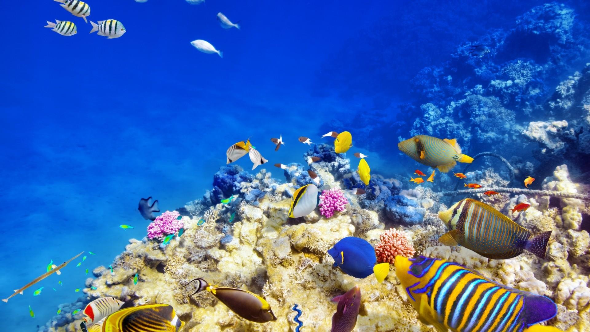 Sfondi tropicali 38 immagini for Sfondi pesci tropicali