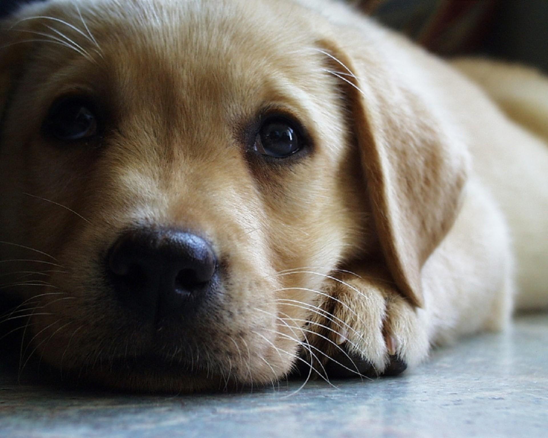 Sfondi cani 61 immagini for Sfondi stupendi hd