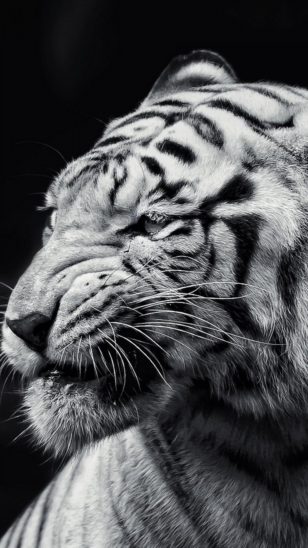 Black Tiger Iphone Wallpaper Download