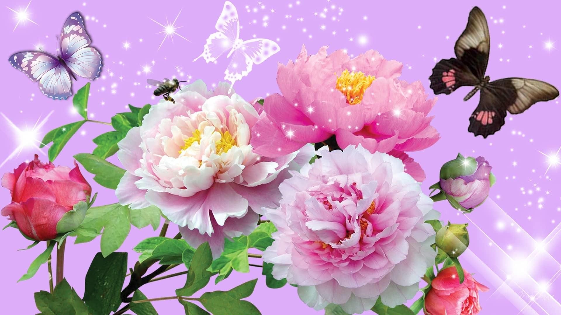 Sfondi Farfalle 62 Immagini