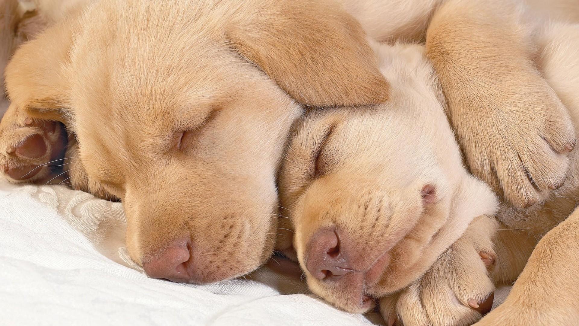 Sfondi cani 61 immagini for Foto desktop animali