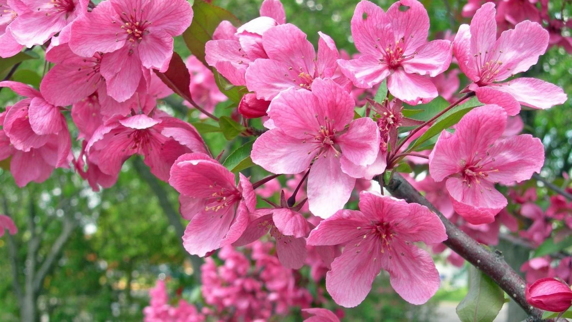 Primavera sfondi 46 immagini for Immagini sfondo desktop primavera
