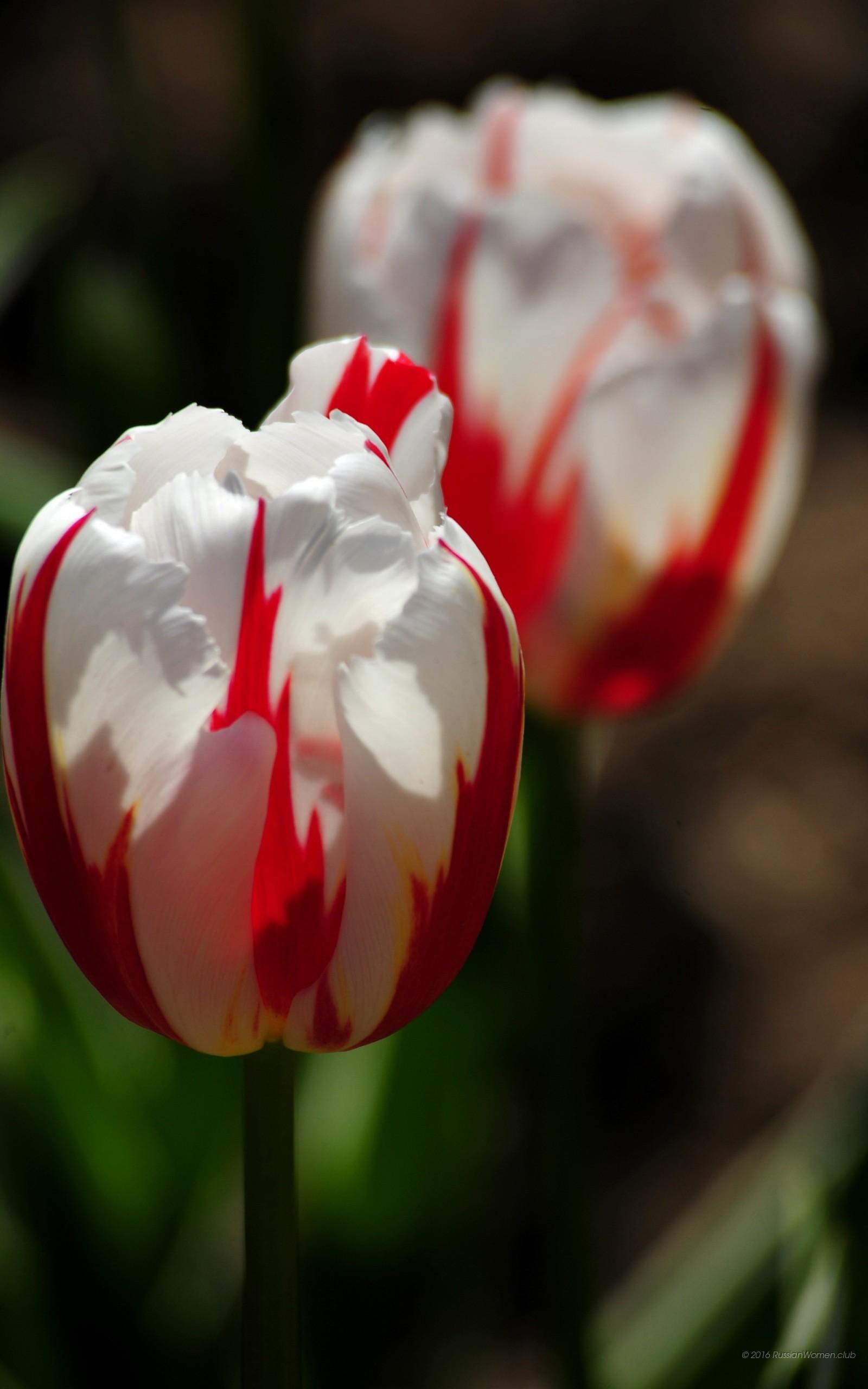 Sfondi primavera hd 71 immagini for 1600x2560 wallpaper hd