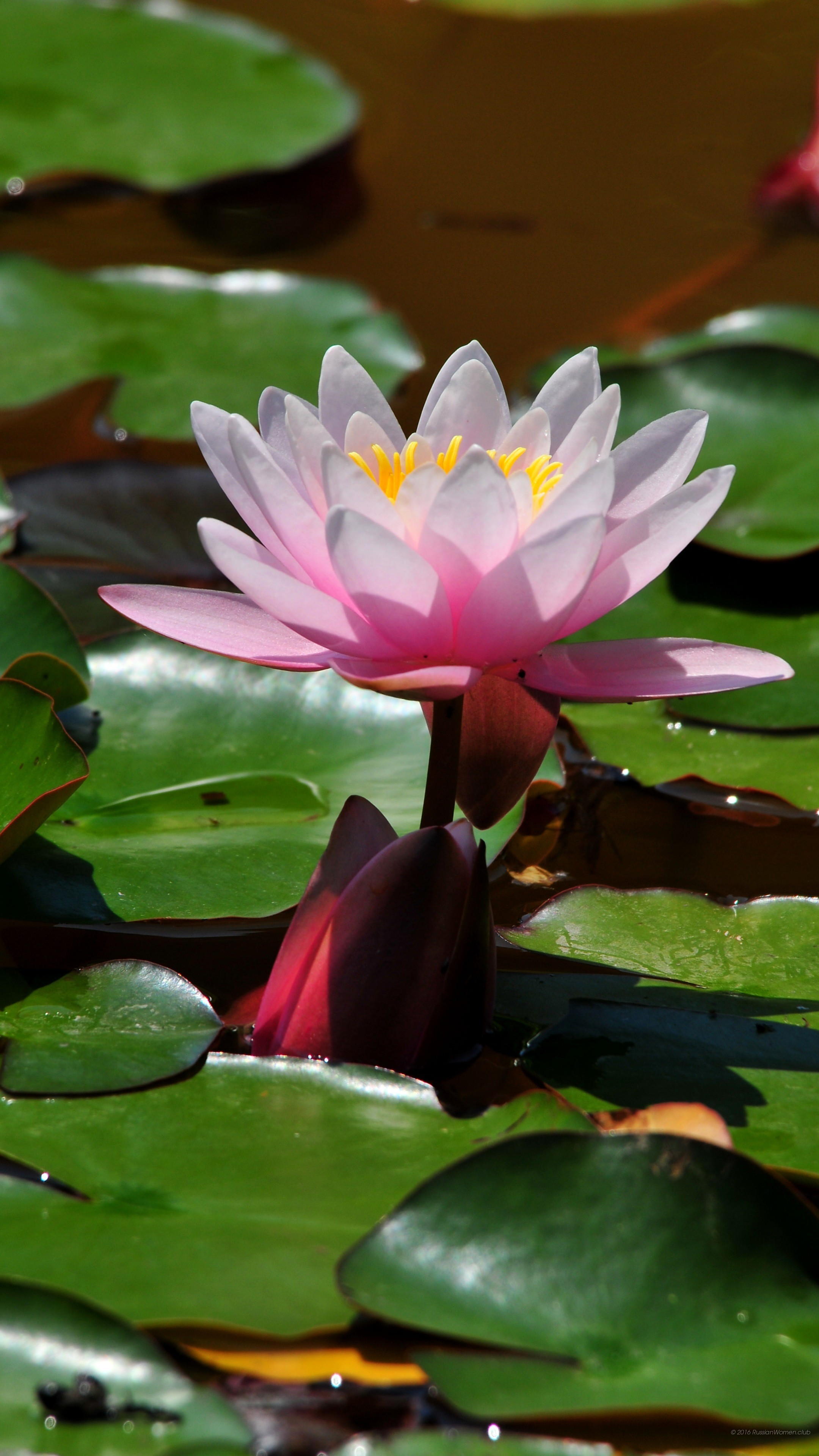 Sfondi desktop fiori 43 immagini for Sfondi desktop fiori