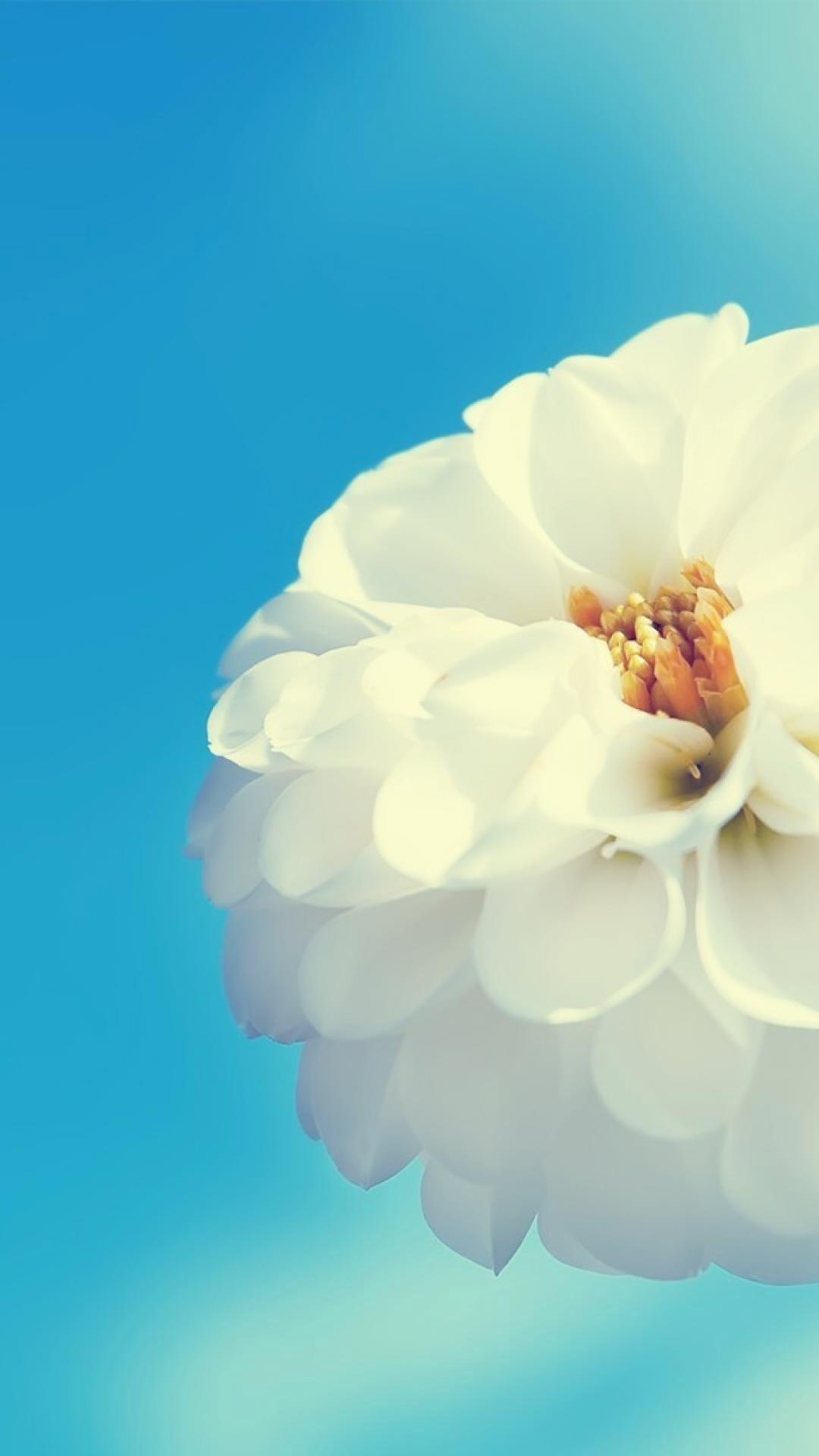 sfondi tumblr fiori  63  immagini