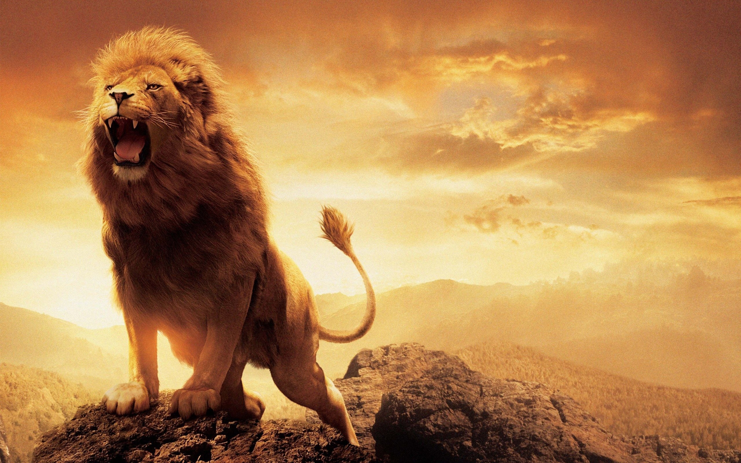 Sfondi leone immagini