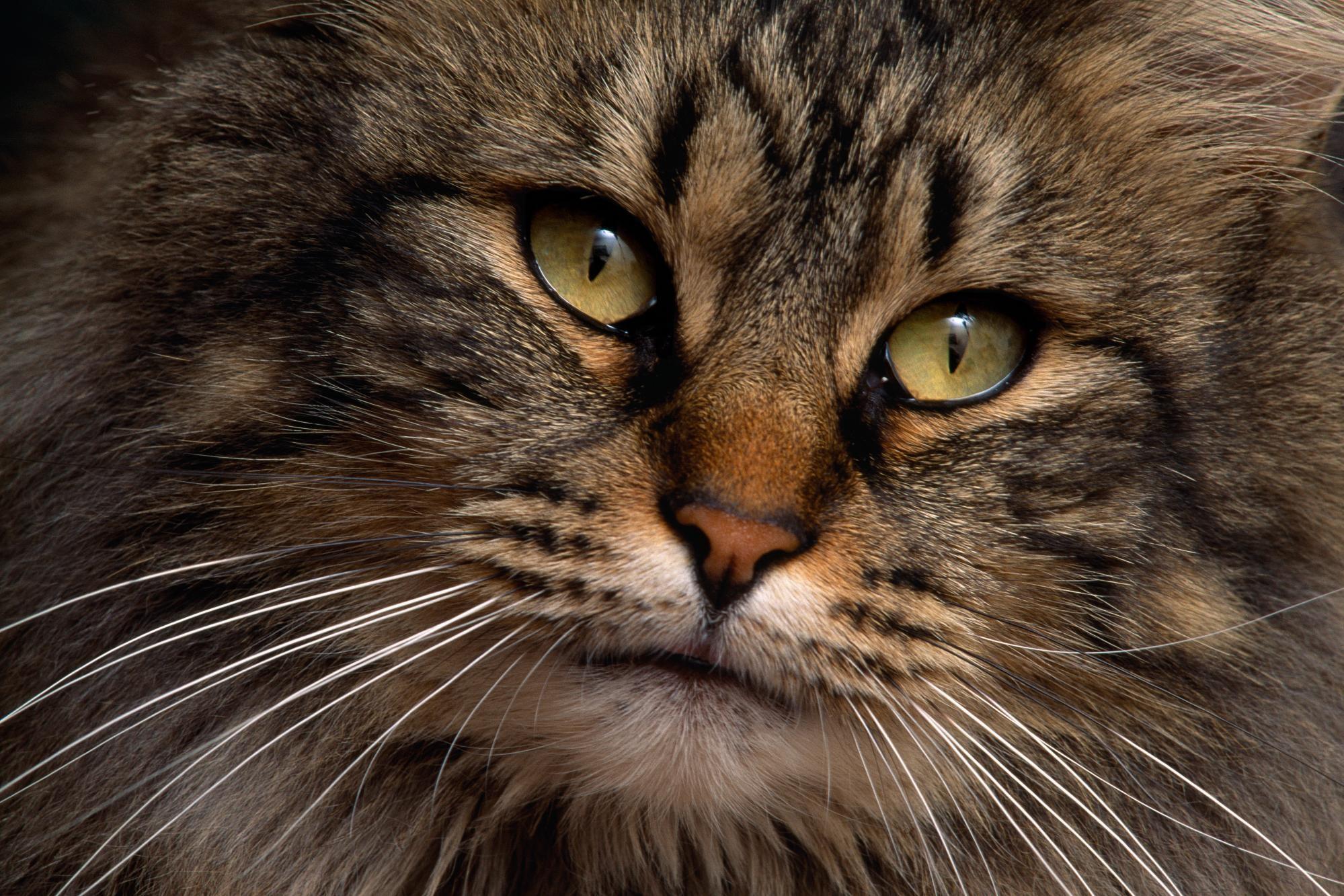 Sfondi animali 59 immagini for Animali desktop