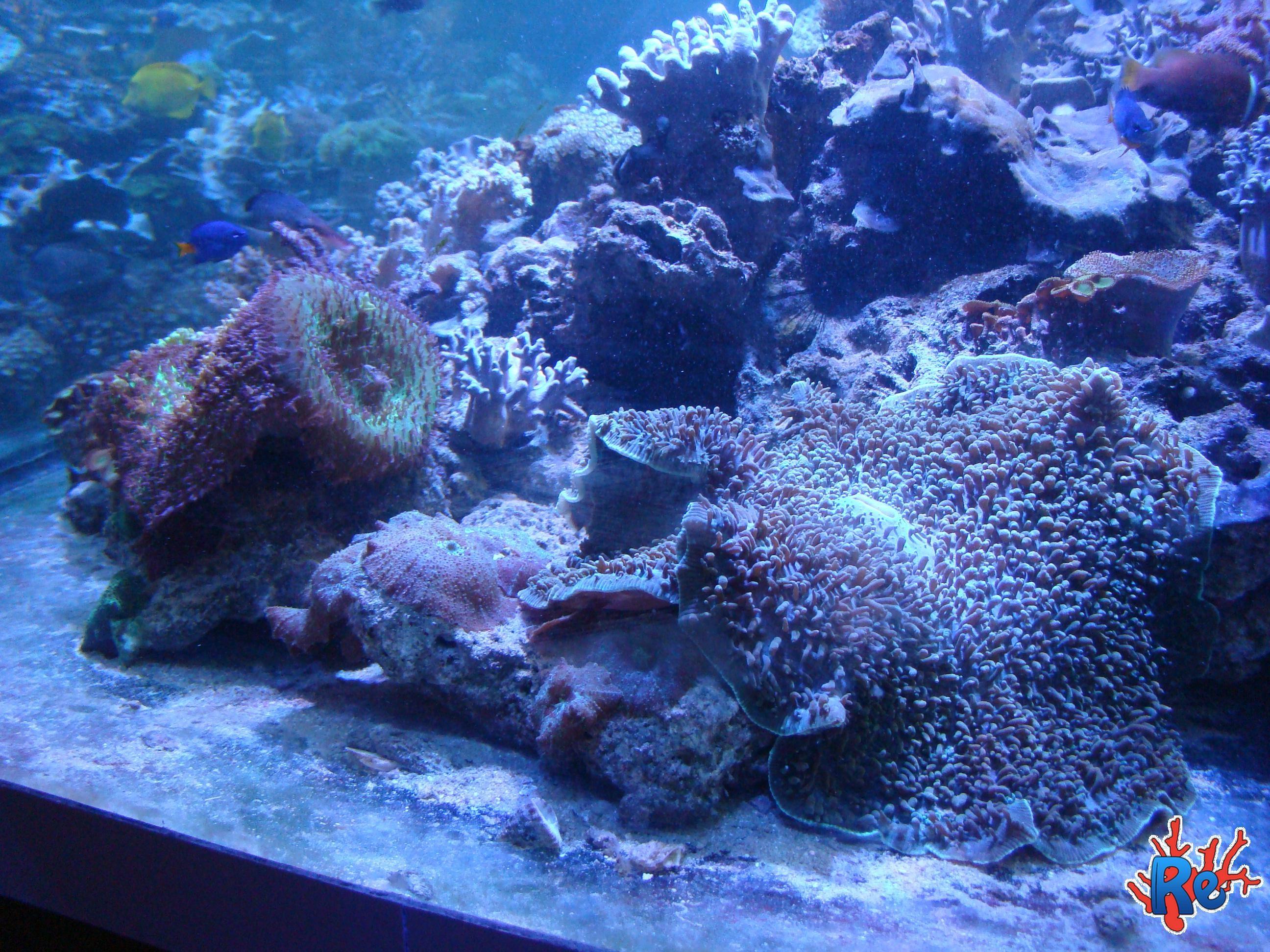 Sfondi per acquari 57 immagini for Immagini coralli marini