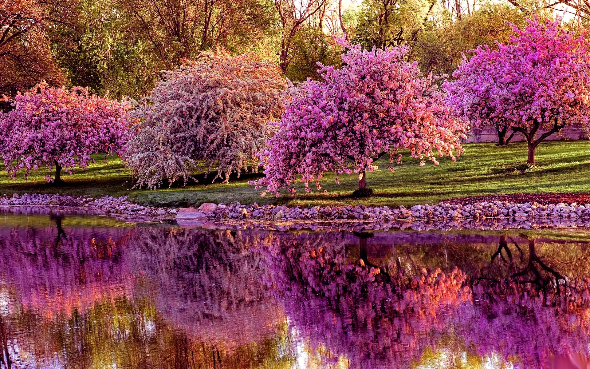 Sfondi primavera 42 immagini for Sfondi desktop primavera