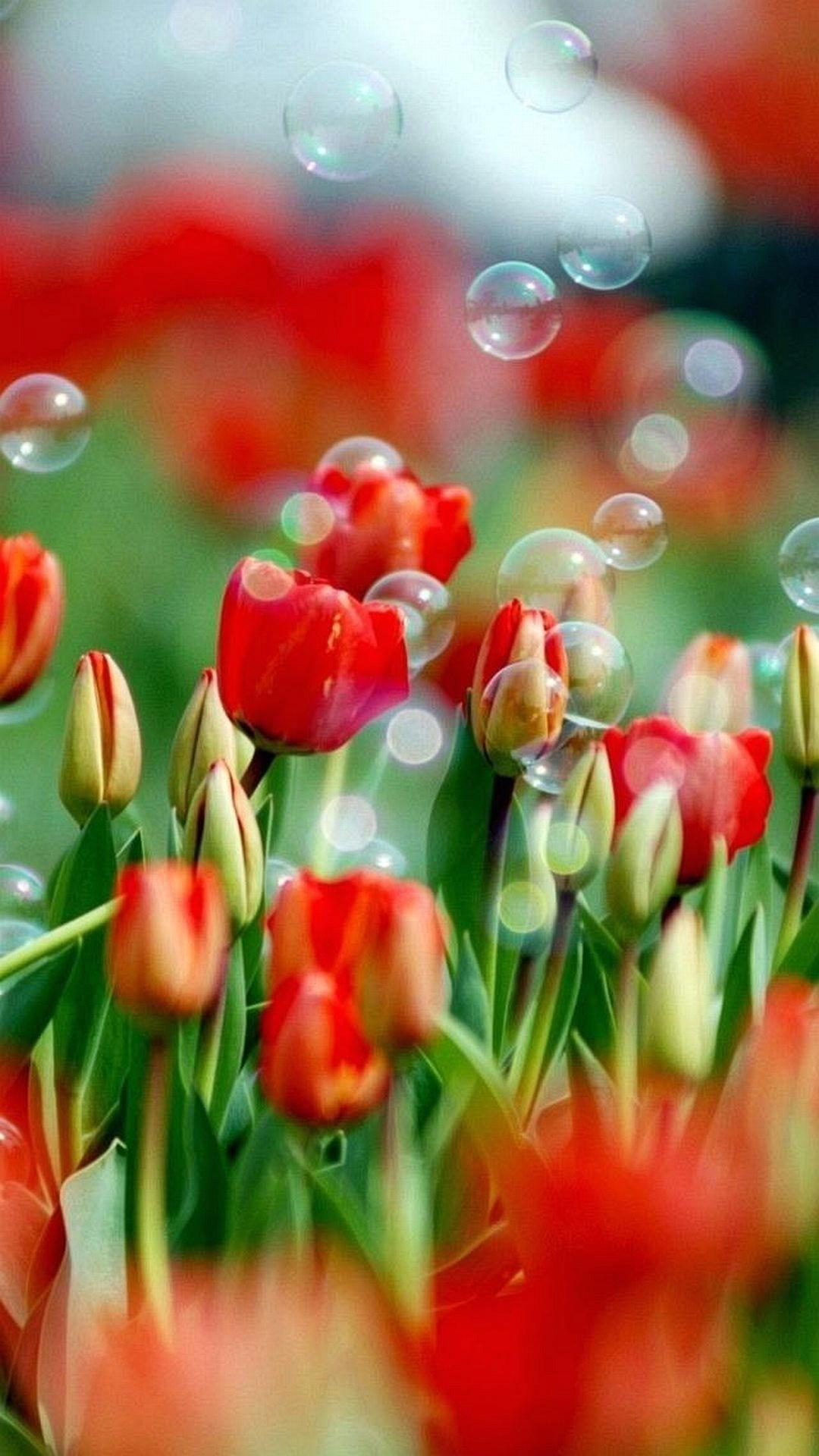 Sfondi hd fiori 70 immagini for Sfondi per cellulare samsung