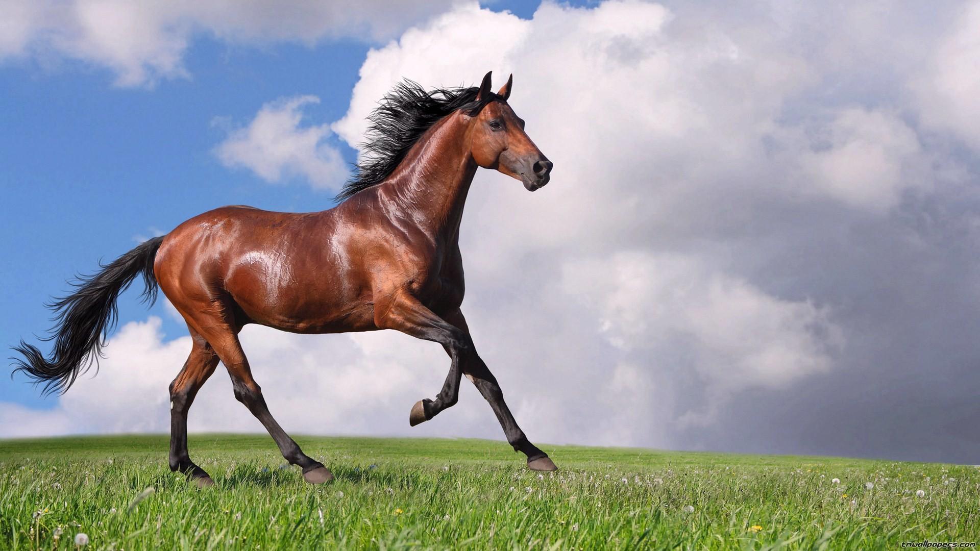 Sfondi cavalli 54 immagini for Sfondi animali hd