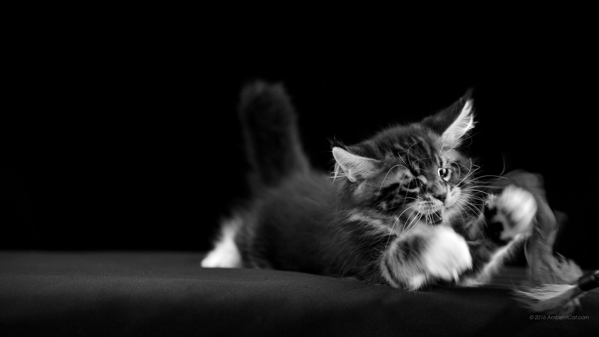 Sfondi bianco e nero 55 immagini for Foto hd bianco e nero